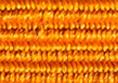 Szlufka G07.10 pomarańczowa
